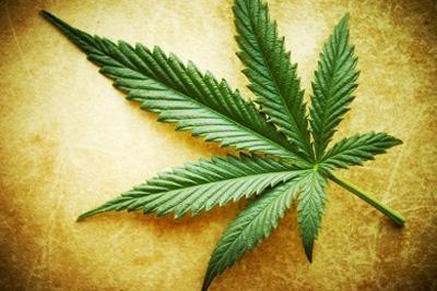 Cannabis y esquizofrenia