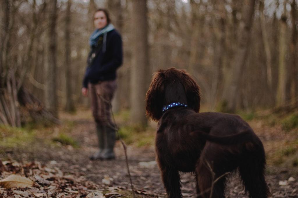 Especialista en intervención asistida con perros de terapia en Barcelona