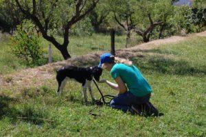 terapia con perros en barcelona