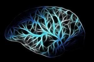 neuropsicologia cerebro