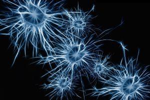 neuropsicologia neuronas